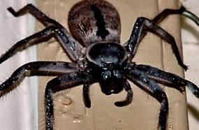 Top 10 Giant Invertebrates You Don't Want To Meet
