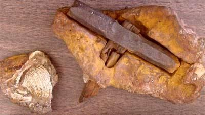 Ancient hammers are 100 million years old