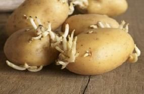 Four Members Of A Family Died After The Woman Made A Simple Mistake With A Potato! Warning!!