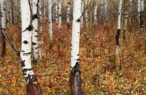 10 Mind-Bending Photos With Camouflaged Animals