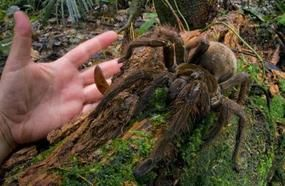 8 Abnormally Enormous Animals That Are Actually Real