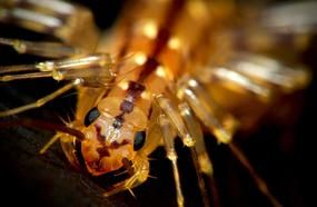 Some Terrifying Animals That You Are So Glad Are Extinct