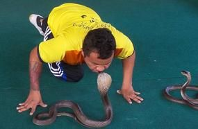 Snakes Of Thailand