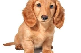 Most Adorable Dog Breeds