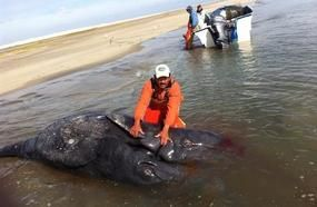 Never-Seen Ocean Monster Washes Up On Shore