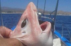 A Strange Creature Captured In Cabo San Lucas, Mexico