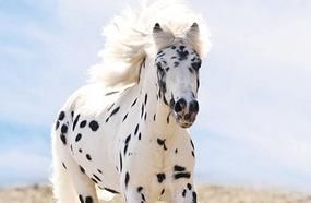 10 Animals With Beautiful Spots