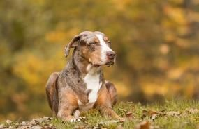 5 Unique Dog Breeds You Will Probably Never See