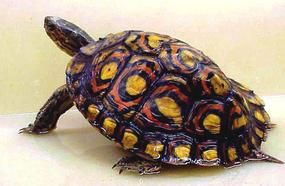 10 Types Of Turtles You Can Have As Pets