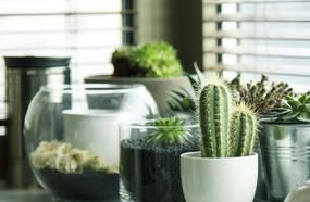 Plant That Helps Clean Cigarette Smoke