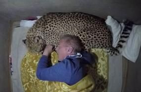 Adrenaline Junkie Uses A Wild Cheetah As A Pillow To Prove A Point, Ends As You Would Expect