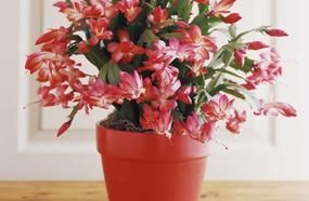 10 Best Christmas Plants And Flowers — Plus How To Make Them Thrive 'Til Santa Arrives