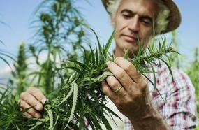 4 Marijuana Stocks Could Control Half Of Canada's Weed Market