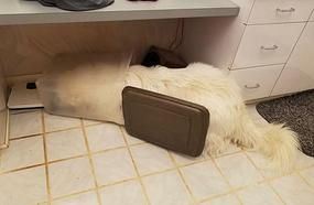 These Dogs Are As Dumb As They Are Cute - Seeing Them Fail Will Make You Laugh And Feel Bad