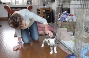 17-Year-Old Cat Lost In 2005 Miraculously Shows Up 13 Years Later