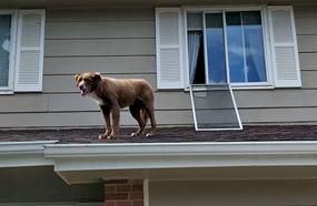 14 Hilarious Photos Of Dogs Doing Dumb Things
