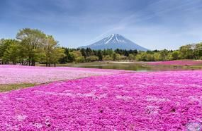 Japan Travel Guide: In-Depth Information For Tourists In Japan