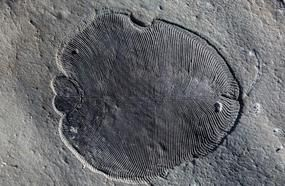 Oldest Evidence Of Animal Life Discovered