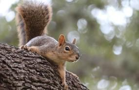 A Man Eats A Squirrel Brain And Then Dies After Contracting Rare Disease