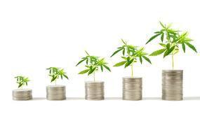 2 Marijuana Stocks That Can Soar If Prices Keep Falling