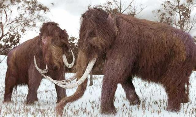 Why we're so fixated on bringing back the woolly mammoth