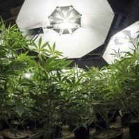 The Best Marijuana Stocks To Buy In 2019