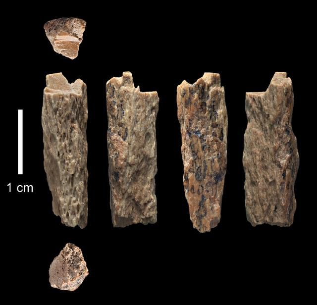 Early Human Cousins May Have Been Jewellers: Study