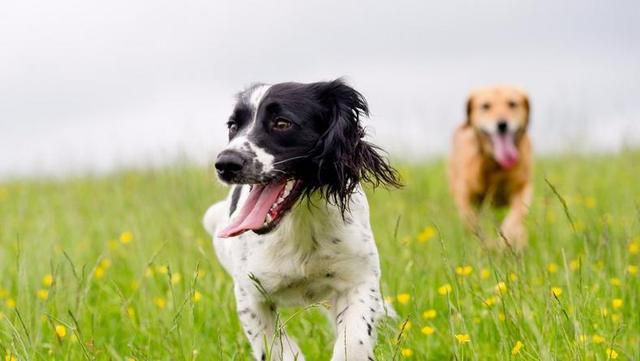Dog Breeds That Are Hypoallergenic