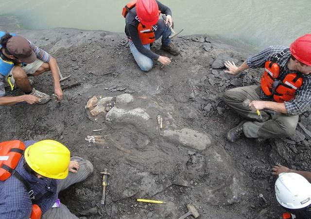 Scientist Accidentally Discovers 20-Million-Year-Old Tusked Sea Cow In Panama
