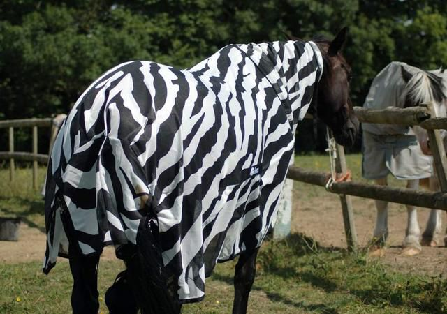 Zebra Stripes Stop Flies Carrying Deadly Diseases From Landing On Them, Research Shows