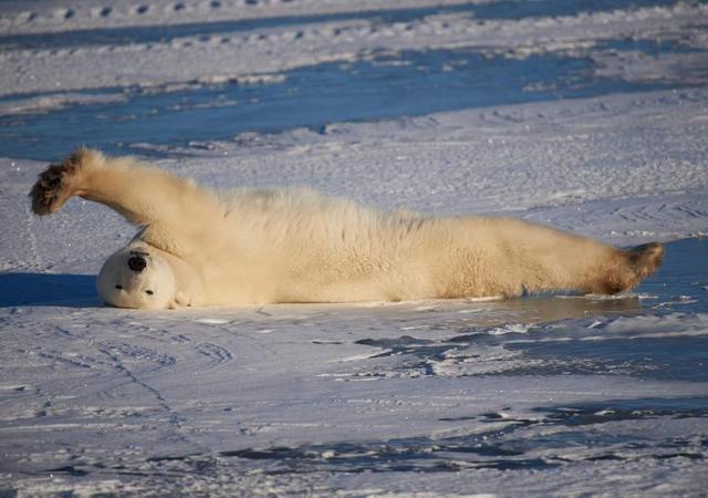 Inside Churchill, Canada's Polar Bear Town