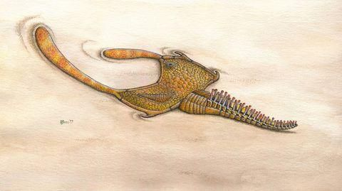 A 150-Year Old Weird Ancient Animal Mystery, Solved
