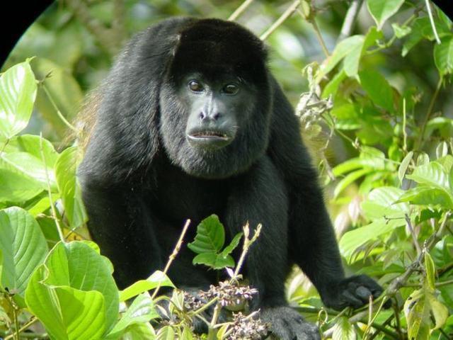 Costa Rica's Best Animal Encounters