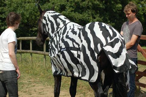 Scientists Dressed Horses As Zebras To Learn What Stripes Are For