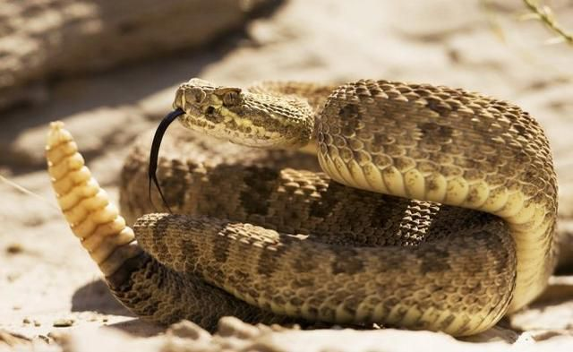 The 7 Deadliest Animals In Mexico