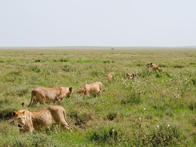I Took 2,000 Photos During A 5-Day Safari In Tanzania