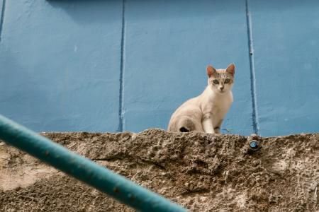 Cats Should Be Killed To Save Earth's Most Endangered Species From Extinction, Scientists Say