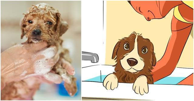 Puppy Care 101: Everything To Know About Giving A Puppy A Bath