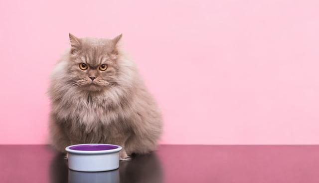 8 Signs Your Cat Is Secretly Mad at You That Are Super Subtle