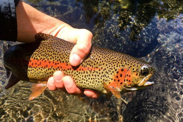Casting for a Good Time? Check Out this Trout and Ale Trail Across the U.S.
