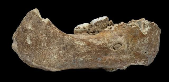 Jaw from a mysterious human species shows early embrace of the high life