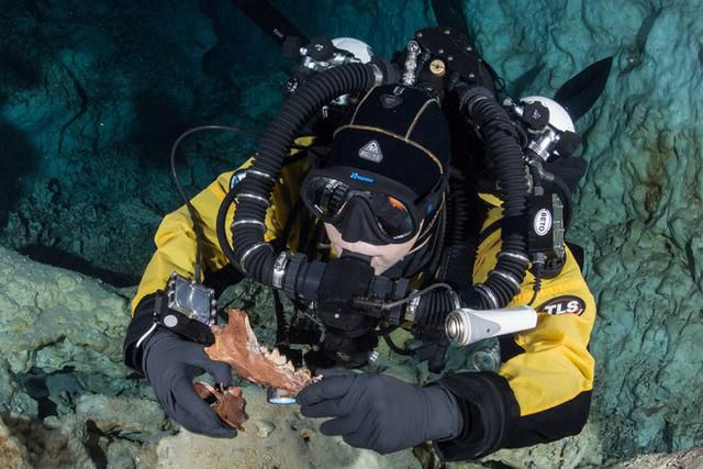 Ice Age Bear and Wolf-Like Creature Found in Underwater Mexican Cave