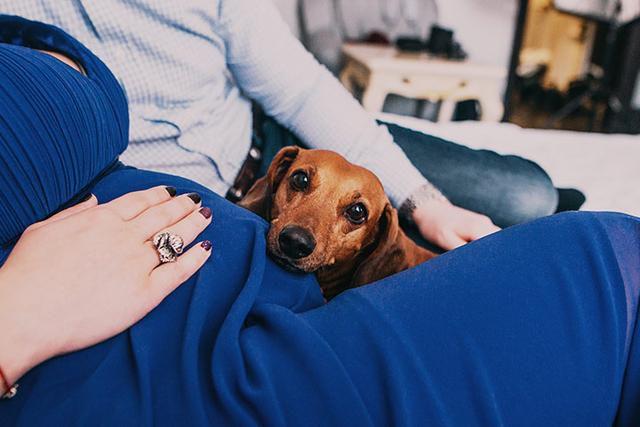 Can Pets Sense Pregnancy?