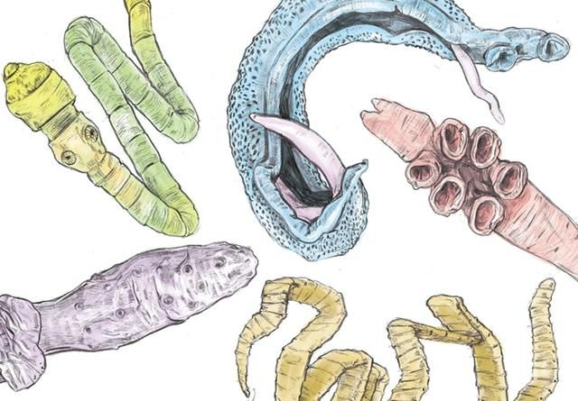 Gut Health and How I'm Getting Rid of Parasites