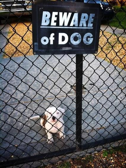 30 'Dangerous' Dogs Behind 'Beware of Dog' Signs