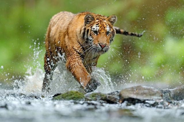 Photos: 10 popular species facing threat of extinction
