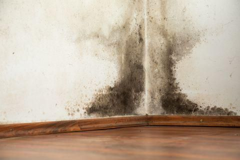 How to Get Rid of Black Mold Naturally