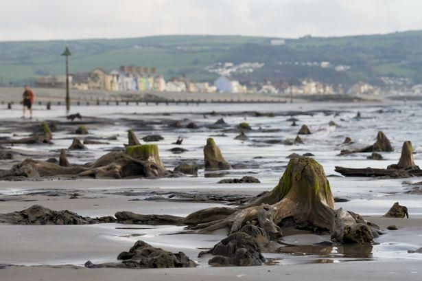 Storm Hannah unearths 'sunken' forest from more than 4,500 years ago