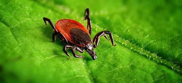 Natural Ways to Rid Your Yard of Ticks