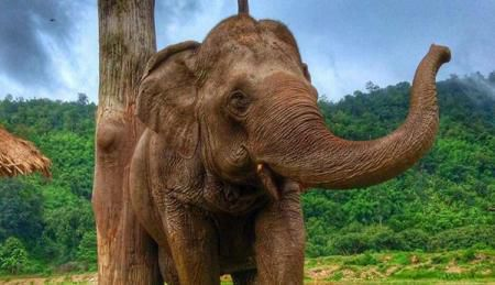 Ethical Elephant Sanctuaries to Add to your Bucket List